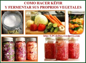 Alimentos Fermentados CLWS