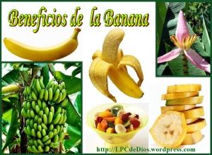 Banana LPCdD