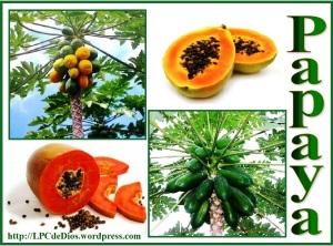 Papaya cl spanish