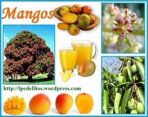 PQC - Mango