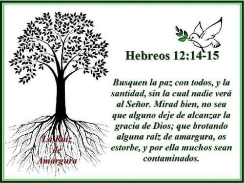 Hebreos 12 vs 14-15 La raíz de amargura