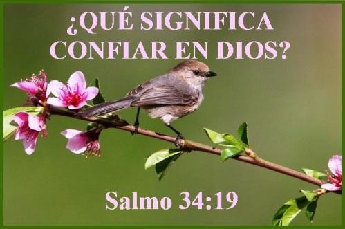 salmo-34-vs-19-s