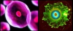 comparison-between-a-cell-and-a-nebula-in-the-universe