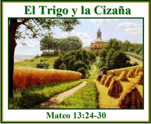 Resultado de imagen para «El Reino de los Cielos es semejante a un hombre que sembró buena semilla en su campo. Pero, mientras su gente dormía, vino su enemigo, sembró encima cizaña entre el trigo…».